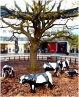hannah MK concrete cows